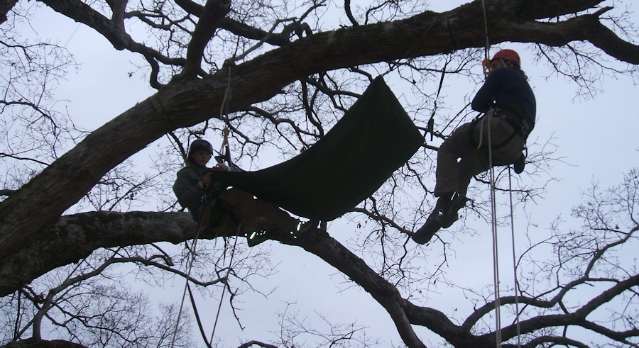Advanced tree climbing training rigging gear in trees