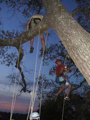 Tree Climbing Class held at Georgia College